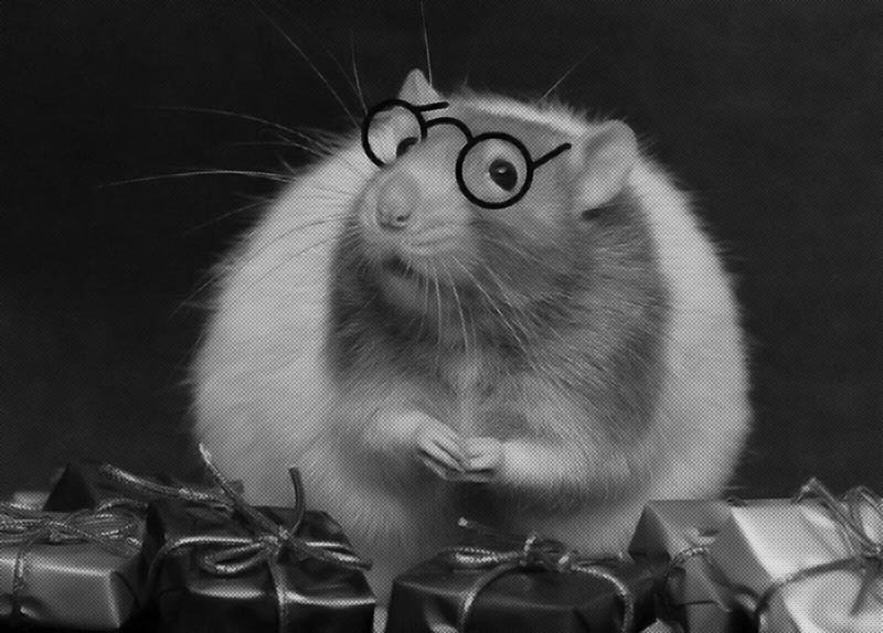 Rat with Glasses and gifts